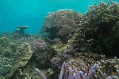 GH010683_Korallen.jpg-Medium